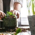 Horta em casa: saiba como replantar vegetais de maneira fácil e zerar o desperdício